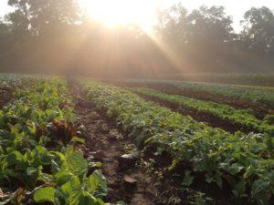 fall-fields-fog-sun