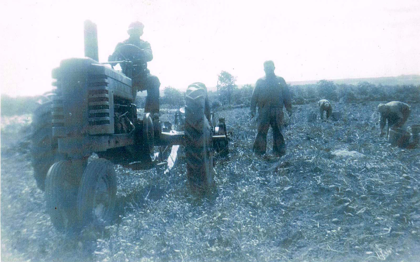 John Jr. (on tractor) and Tony (on right) in the fields circa 1940s.