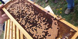 Beekeeping Workshop- Starting Fall Preparation @ Massaro Community Farm
