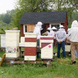 Beekeeping Workshop- Inspection and Monitoring @ Massaro Community Farm
